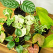Indoor Plant Selection